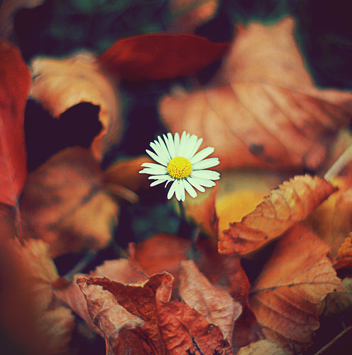 autumn, fall, feel, flower, flower spark, herbst - inspiring picture on Favim.com