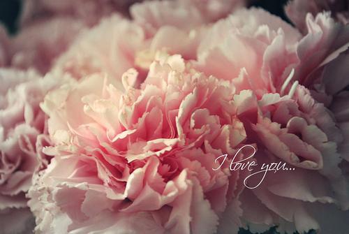 beautiful beauty delicate flowers Favimcom 499838 large - Beautiful :x.