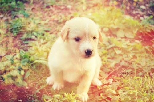 Autumn_puppy_by_luizalazar-d5f4f45_large