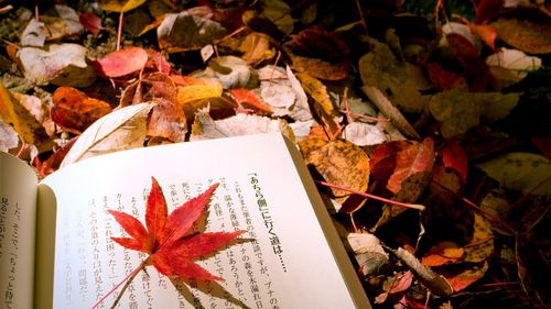 Leaf_on_the_chinese_book_67_1366x768_large