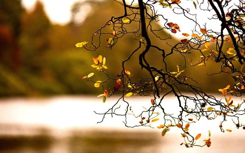 Tree_branch_7_1440x900_large