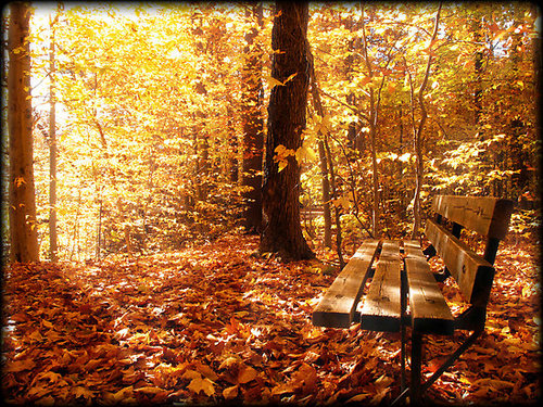 """A Forest Bench in a Fall Scene"" by Chantal PhotoPix 