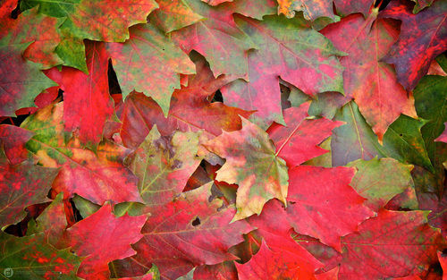 Fall-autum-wallpaper-2560x1600_large