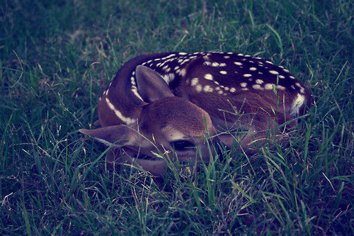 animal fawn gentle nature 9fe5edf08a8eb438695f03ff3ba9e899 h large gentle creature / via faula (tumblr) picture on VisualizeUs