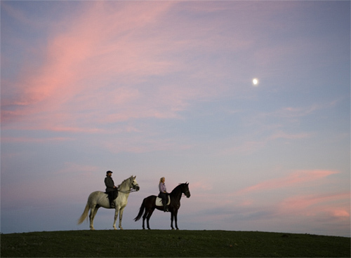 Tch_horses_pink_sky_2_large