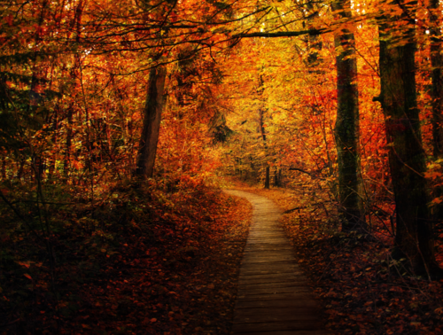 Autumn_trail___premade_bg_by_emerald_depths-d5dxtmb_large