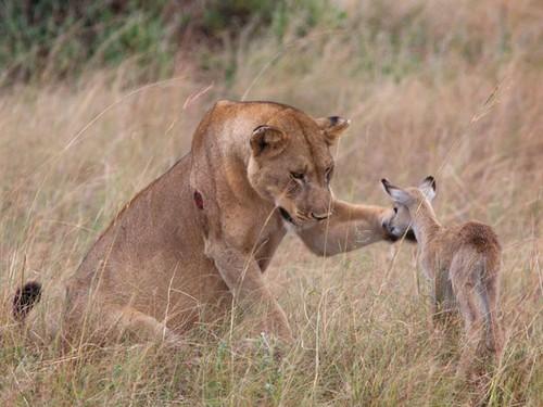 Hayvan Resimleri G�zel �ekilmi� Hayvan Foto�raflar�