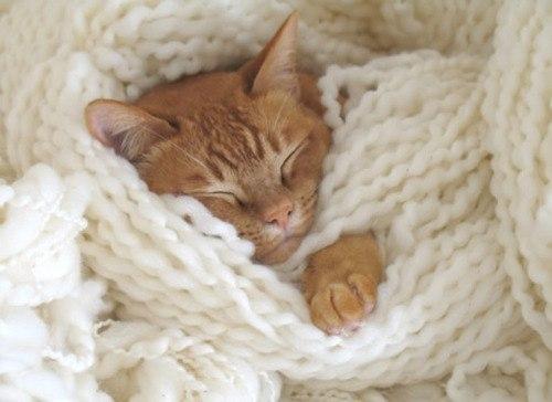 Kediniz Gece Uyumuyorsa Neler Yapabilirsiniz? Gece Uyumayan Kedilere Nas�l Davranmal�?