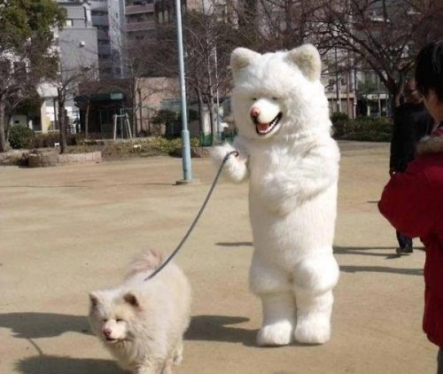 8fc4e0157d61e686e8f83427f718bc9d-guy-in-dog-suit-walking-dog_large