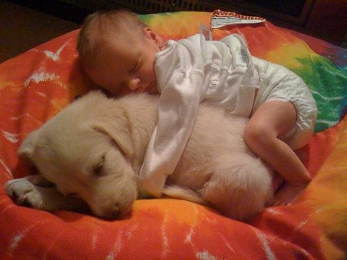 Baby-sleeping-on-puppy_large