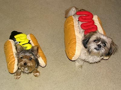 dog hotdogs large Image detail for  Funny Pictures: Should Pets Wear Halloween Costumes?