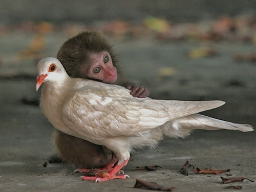 Normal_love-wallpaper-love-animals-funny-cute_large