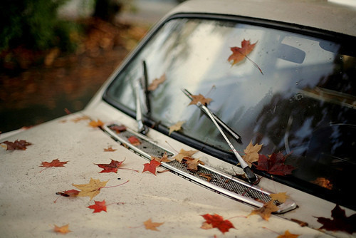 Autumn_fall_vintage_leaves_car_window-169aa4fd9b62e32c23c1ebfb627859d4_h_large