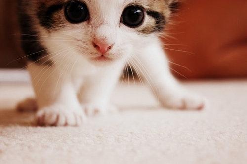 14041-cats-cute-kitten_large
