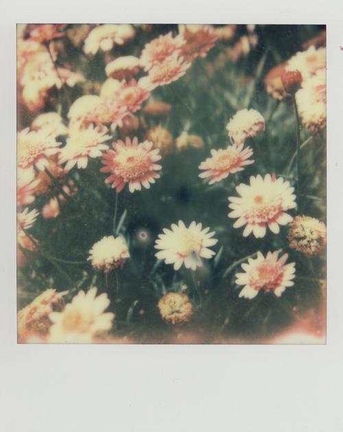 Foto bij Strange flowers