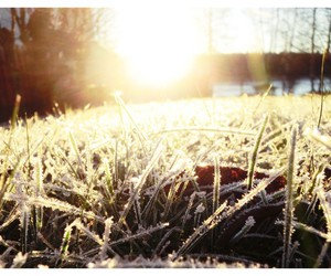 frost