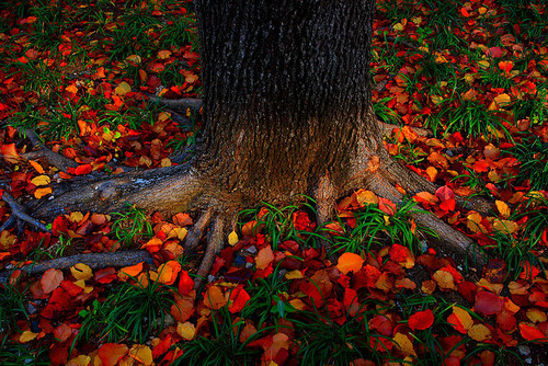 Autumn'ness (spooktacular-autumn: fall 062a by Ganesh...)
