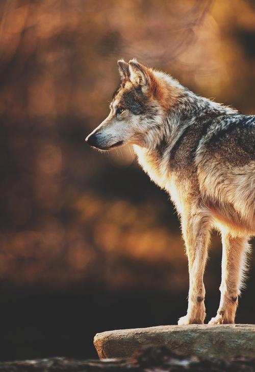 Hayvanlarla �lgili �ocuk Masallar� Hayvan Sevgisiyle �lgili G�zel Masallar...