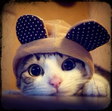 Gato-com-orelhas_large