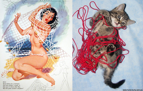 tumblr mct722JrSM1rhh2v5o1 500 large Cats That Look Like Pin Up Girls