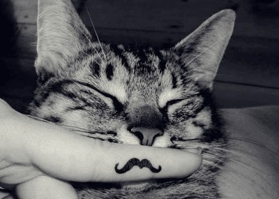My_mustache_cat_by_simiyo-d4rsol5_large