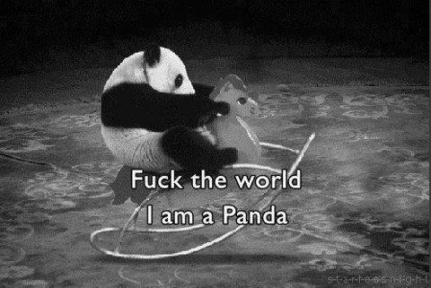 Animal-panda-sweet-text-favim.com-533445_large