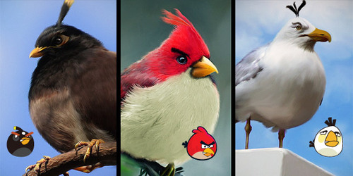 Natural-angry-birds-character-names-functions_large