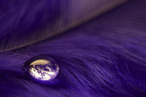 ► I would... ♫ Purple_Water_by_nax_08_large