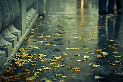 Autumn_leaves_rain____road_water-ff0d53adfac2186d3f04c6caf6fd6968_h_large