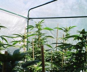garden of weed