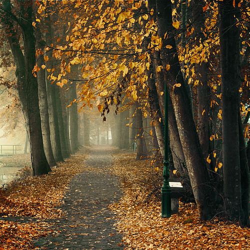 Autumn_beautiful_color_dark_fall_fog-c28b27ef2cd70f09106db2c0756f0a5b_h_large