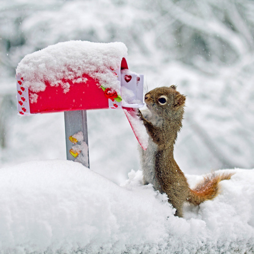 Squirrel_mail_cute_snow_animal_large
