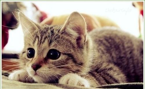 Bonito-kitty_large