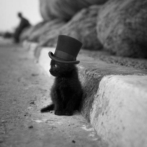 cat cute hat   animal lonely f93551682a186a99d8f01903885d3b80 h large psycho picture on VisualizeUs