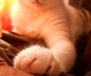 cat fluffy cute paw love