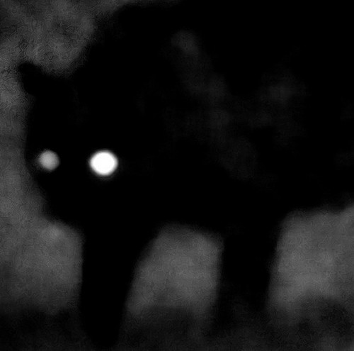 http://data.whicdn.com/images/46220870/scary_black_cat_shadow_large.jpg