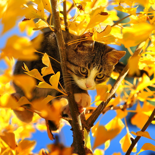 Autumn,cat,fall,kitten,tree,yellow-20e9f943562dfd7fffb3bef6f31d47f7_h_large