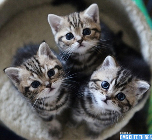 Cats-omg-cute-things-090112-20_large
