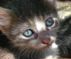 cute pretty cat blue eyes
