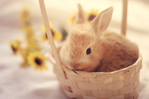 Bunny_in_a_basket_by_aoao2-d5qi8l2_large