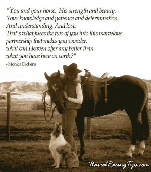 inspirational horse quotes for girls quotesgram