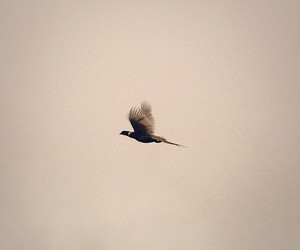 birds england