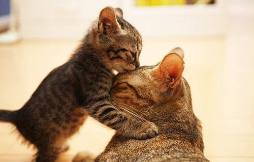 Animal Love Pictures
