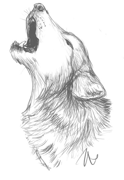 Gray Wolf Howling Drawing Wolf howling  We Heart It