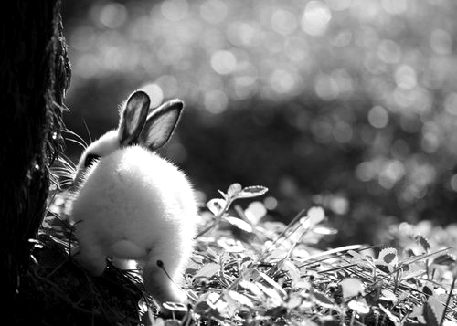Animales-animal-animals-black-and-white-favim.com-587502_large