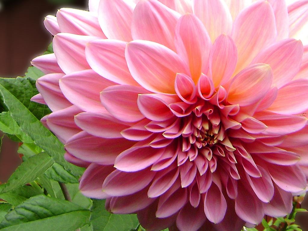 Paisajes de Ensueño: Paisajes de Flores on We Heart It