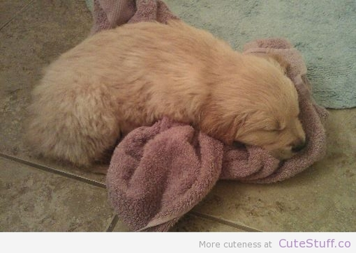 puppy tired after bath large Puppy Tired After Bath | CuteStuff.co   Cute Animals, Cute Pictures, Cute Videos and MORE!