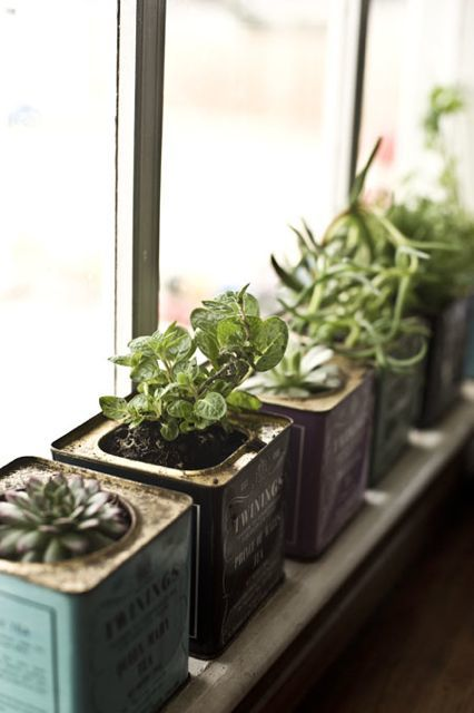 Old_tea_tins_-_little_planters_for_a_windowsill_garden_large