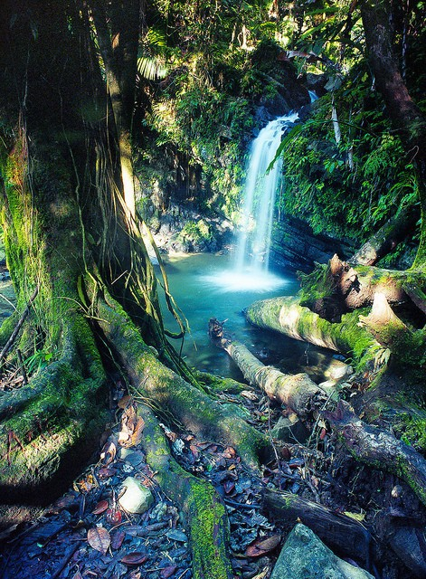 255227503852735308 ggmXrODC c large Enchanted falls in the forest ~ Rio Grande, Puerto Rico