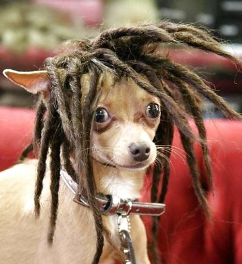 A.aaa-rasta-dog_large